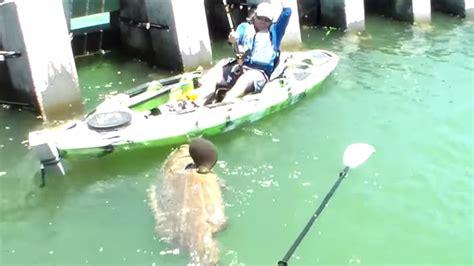 kayak fish catches ever biggest chew grouper goliath dip seen pound bottom