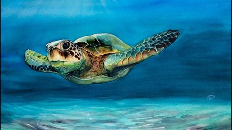 colors of the turtles watercolor sea turtle painting demonstration