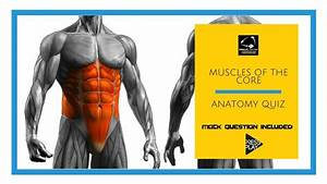 Muscles Of The Core  Anatomy Quiz