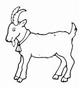Goat Coloring Symbol Goats Pages Sheep Animals sketch template
