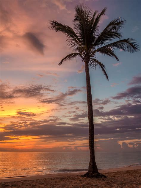 coconut tree  sunset  stock photo
