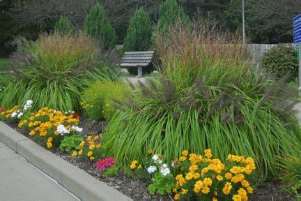 17 best images about grass gardens on gardens ornamental grasses and free front