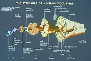 Diagram Of Wool Fibre Structur