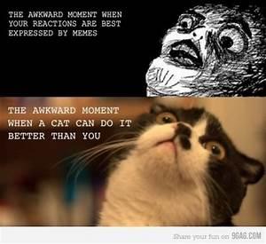 cat-cat-meme-comic-funny-lololol-memes-Favim.com-303212 ...
