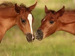 Raising An Orphan Foal