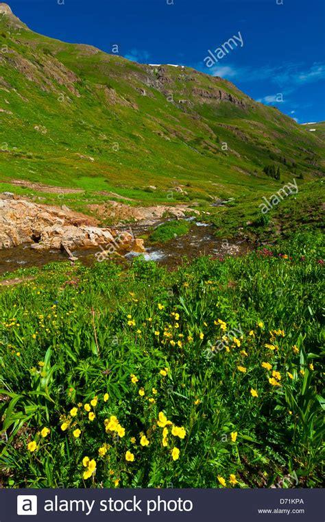Haus Kaufen Rocky Mountains Usa by Wildblumen American Becken San Juan Gebirge Bereich Der