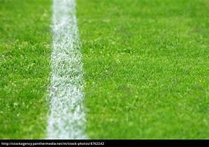 Rasen Lüften Mit Lüfterwalze : fu ball rasen mit linie soccer grass stockfoto 4762242 bildagentur panthermedia ~ Yasmunasinghe.com Haus und Dekorationen