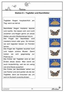 Was Machen Schmetterlinge Im Winter : die schmetterlinge lernbiene verlag ~ Lizthompson.info Haus und Dekorationen