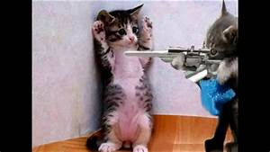 Funny Pics Of Cats And Dogs With Guns   www.pixshark.com ...
