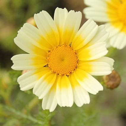 a picture of a flower pictures of a flower wallpaper sportstle