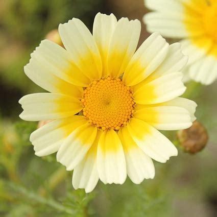 pictures of a flower pictures of a flower wallpaper sportstle