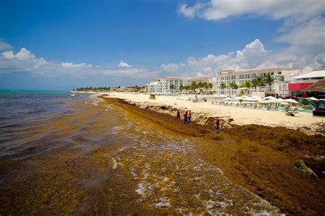 Afecta sargazo al sector gastronómico de Playa del Carmen ...