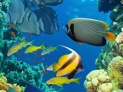 Ocean Fish Desktop Tropical Colorful Backgrounds Marine