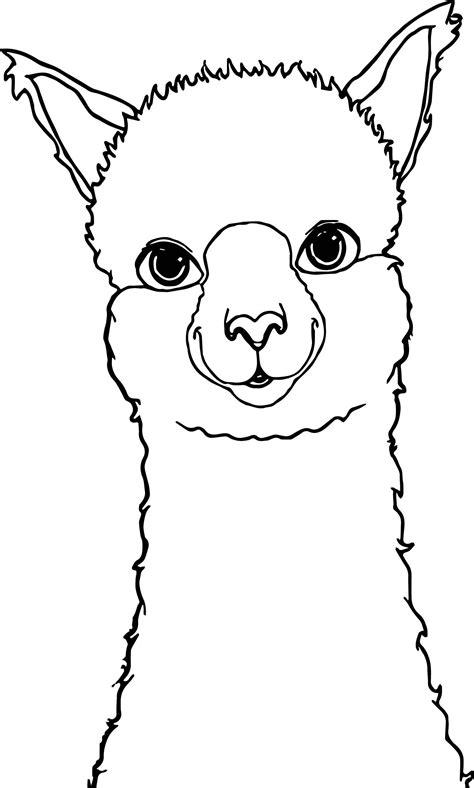 alpaca drawing coloring page alpaca drawing llama face