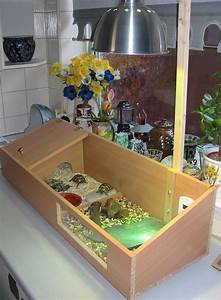 indoor tortoise enclosure - Google Search | Tortoises ...