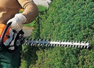 Taille Des Haies : taille des haies entretien jardin jardinage g n rale ~ Dallasstarsshop.com Idées de Décoration