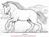 Coloring Horse Horses Clydesdale Wonderful Hoofprints Lovers Neo sketch template