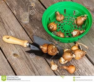 Quand Planter Des Dahlias : quand planter des jonquilles l 39 atelier des fleurs ~ Nature-et-papiers.com Idées de Décoration