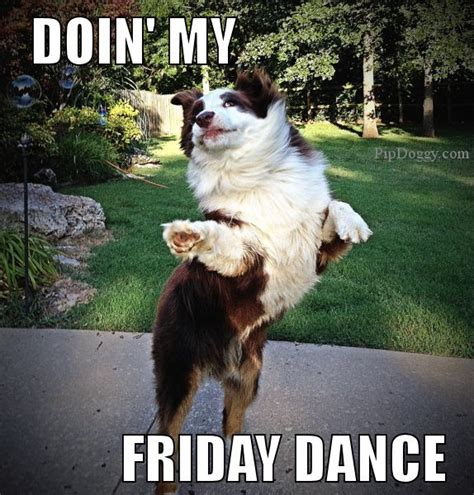 Funny Tgif Memes - dog meme friday dance tgif dogs pinterest friday dance dance and meme