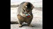Résultat d'image pour Image de chat rigolo
