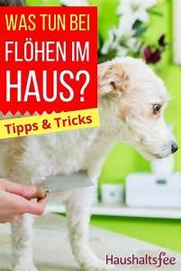 Flöhe In Der Wohnung Was Tun : 261 best toilette wc reinigen images on pinterest ~ Buech-reservation.com Haus und Dekorationen