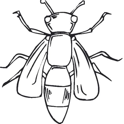 Firefly Lightning Bug Cartoon