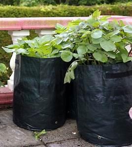 Pflanzen Bewässern Pet Flaschen : balkon gestalten und bepflanzen die besten ideen mein sch ner garten ~ Whattoseeinmadrid.com Haus und Dekorationen