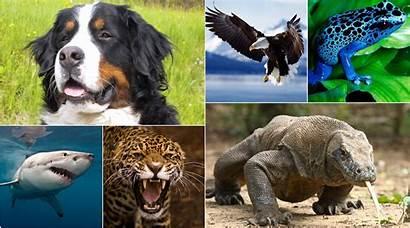 Animal Expectancy Worldlifeexpectancy