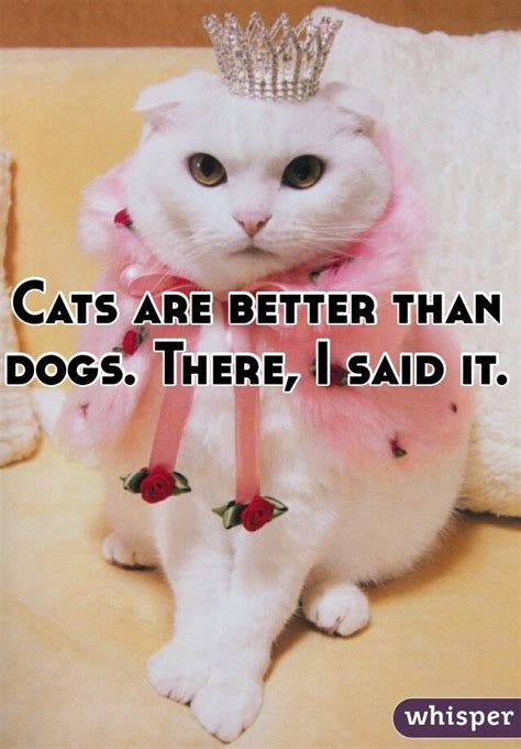 cats are better than dogs cats are better than dogs there i said it
