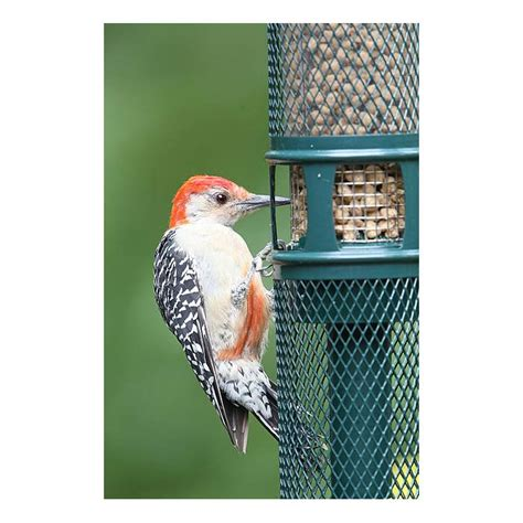 amazon com squirrel buster peanut plus wild bird feeder
