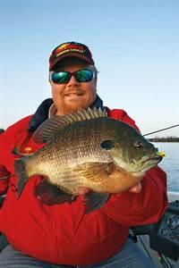 Bluegill Fishing Rivers - In-Fisherman