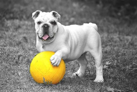 top  coolest dog breeds list  pictures  facts