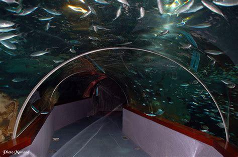 aquarium de s 233 bastien les topos pyr 233 n 233 es par mariano