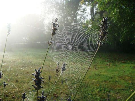 didierdefrance toiles d araign 233 es un matin de ros 233 e