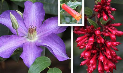 Summer Already? Shock As June Flowers Bloom Months Early
