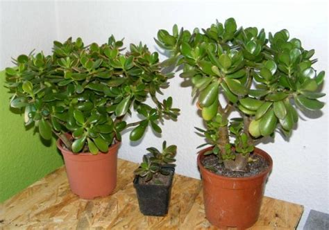 Blühende Zimmerpflanzen Pflegeleicht by Pflegeleichte Zimmerpflanzen 18 Vorschl 228 Ge Archzine Net