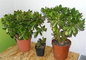 Blühende Zimmerpflanzen Pflegeleicht : pflegeleichte zimmerpflanzen 18 vorschl ge ~ Michelbontemps.com Haus und Dekorationen