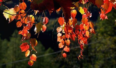 Herbst Garten Anlegen by Den Garten Im Herbst Anlegen Farbenpracht Garantiert