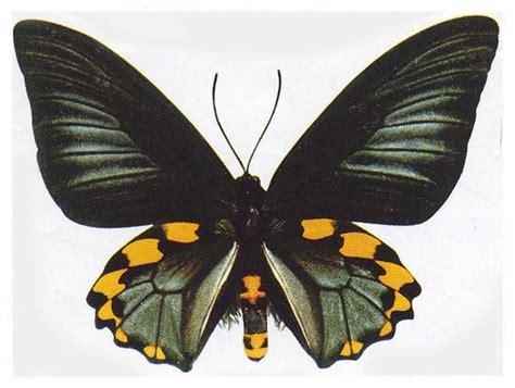 gambar kupu kupu cantik animasi korea meme lucu emo bergerak