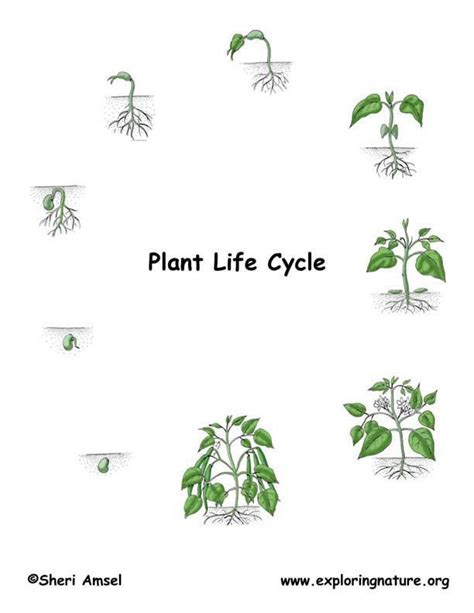 """Week 1 Human And Plant Life Cycles  """"at Last"""""""