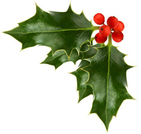 christmas holly clip art clipartioncom