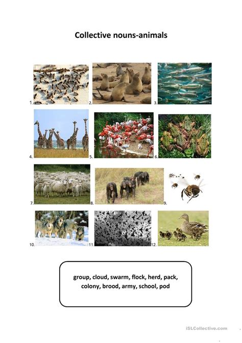 collective nouns animals worksheet free esl printable worksheets made by teachers