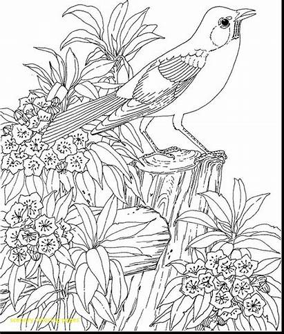 Scenery Coloring Pages Drawing Adults Scenes Getdrawings