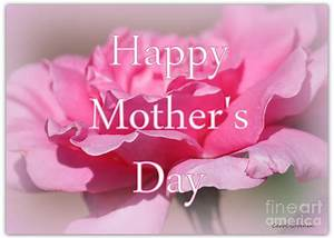 Pink Rose Mother's Day Card Photograph by Carol Groenen