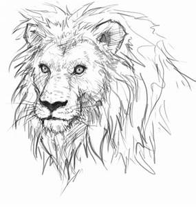How to draw lion - drawing and digital painting tutorials ...