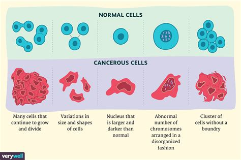 Cancer Cells Vs Normal Cells How Are They Different