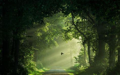 Wallpaper : sunlight, trees, landscape, birds, nature ...