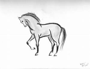 Simple Animal Drawings In Pencil Easy Animal Sketches In ...