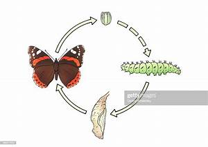 Life Cycle Of A Butterfly Including Egg Caterpillar