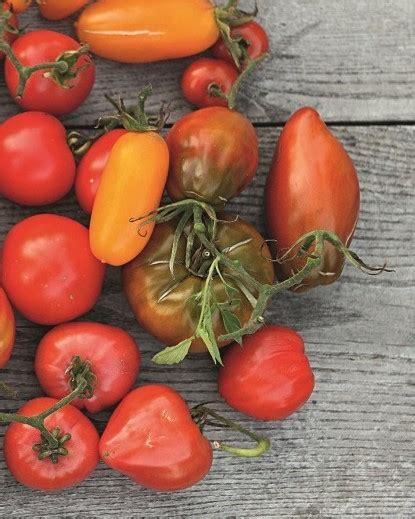 Kas šobrīd darāms tomātu siltumnīcā? — Santa
